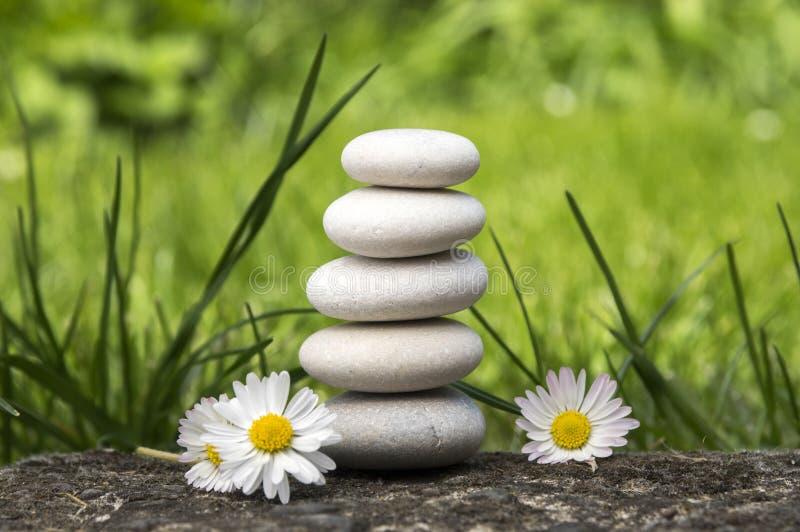 和谐和平衡,简单的小卵石耸立和在绽放在草,朴素,五块石头的雏菊花 免版税图库摄影