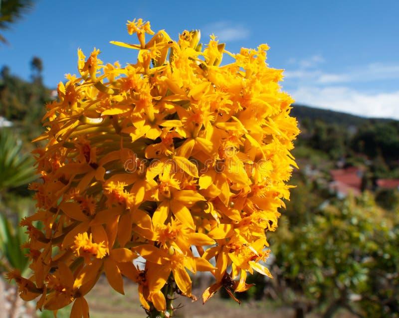 和轻地关闭对美丽的小黄色花 免版税库存照片
