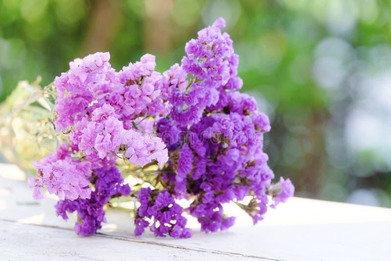轻和黑暗的口气紫色Statice 免版税库存照片