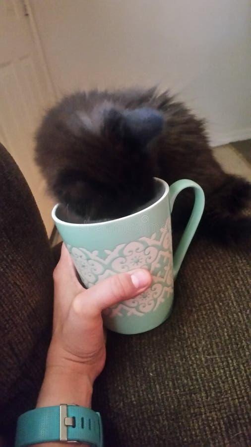 咖啡上瘾者 库存图片