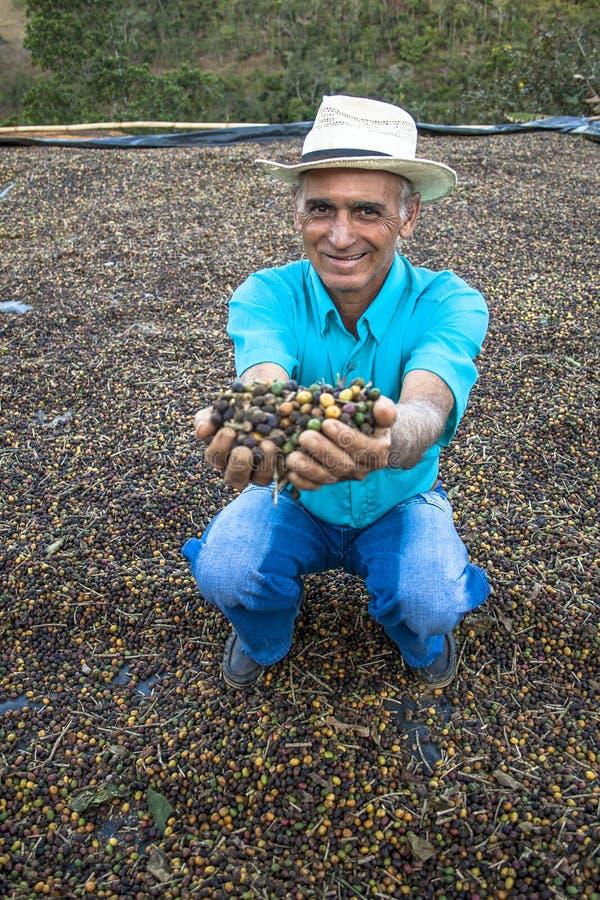 咖啡农夫 库存照片