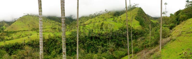 咖啡哥伦比亚地区 免版税库存照片