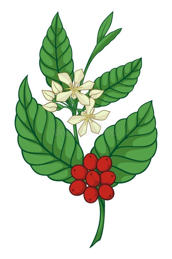 咖啡图标结构树 皇族释放例证