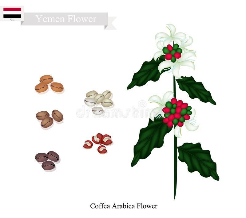 咖啡属阿拉伯咖啡花,也门的全国花 皇族释放例证