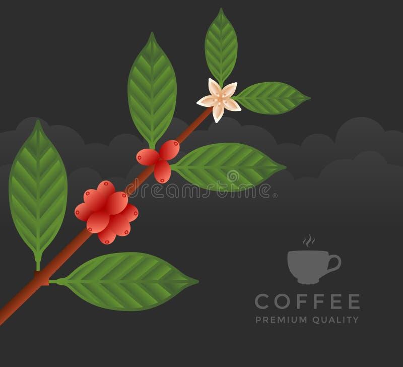咖啡树分支 库存例证