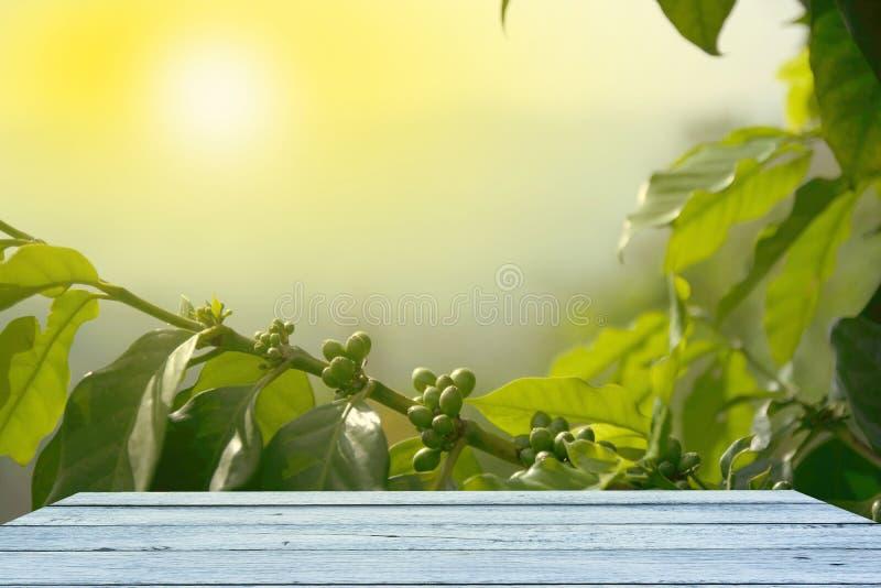 咖啡树背景,木桌 库存图片