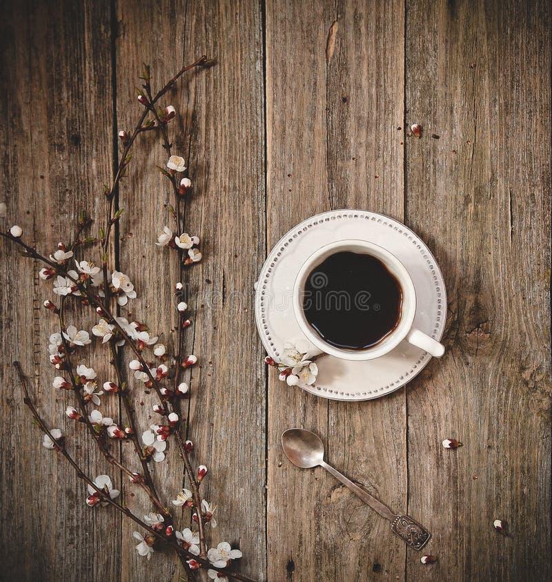 咖啡白色茶碟木杨柳分支芽 图库摄影