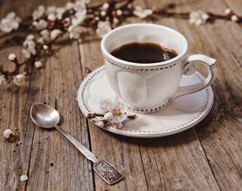 咖啡白色茶碟木杨柳分支芽 库存照片