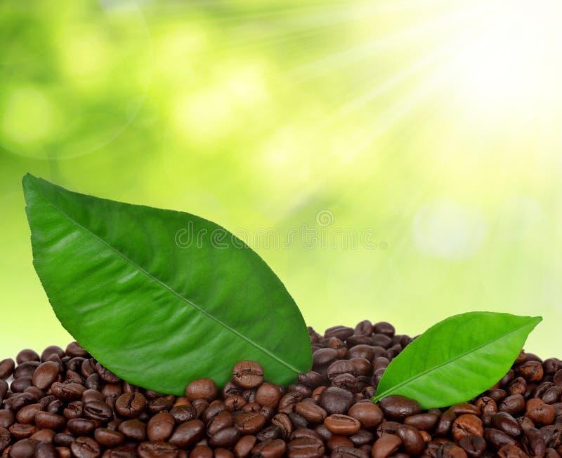 咖啡粒 库存照片