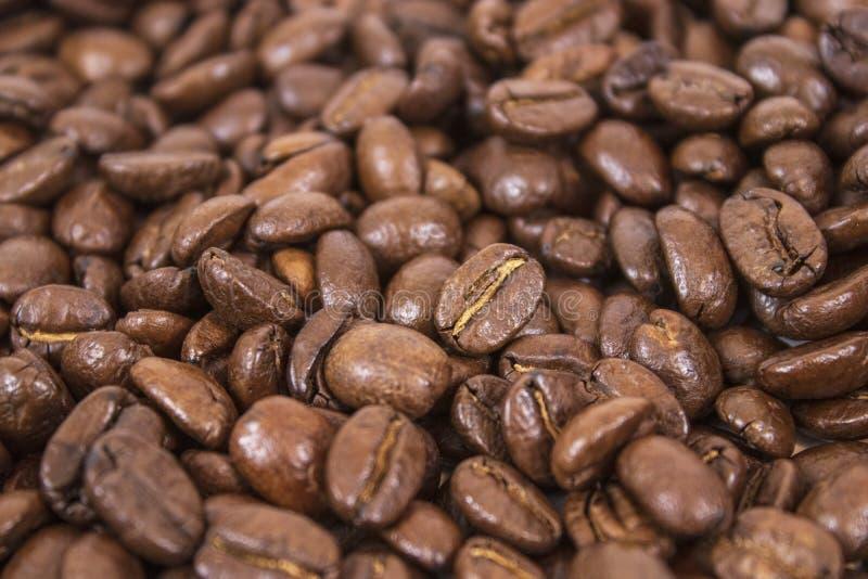咖啡豆大模型咖啡馆背景的 免版税图库摄影