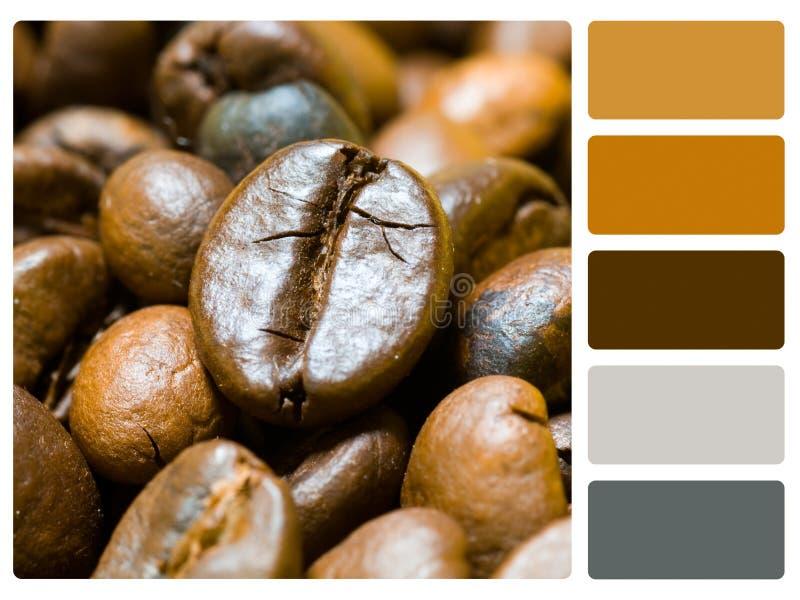 咖啡豆色板显示样片 免版税库存照片