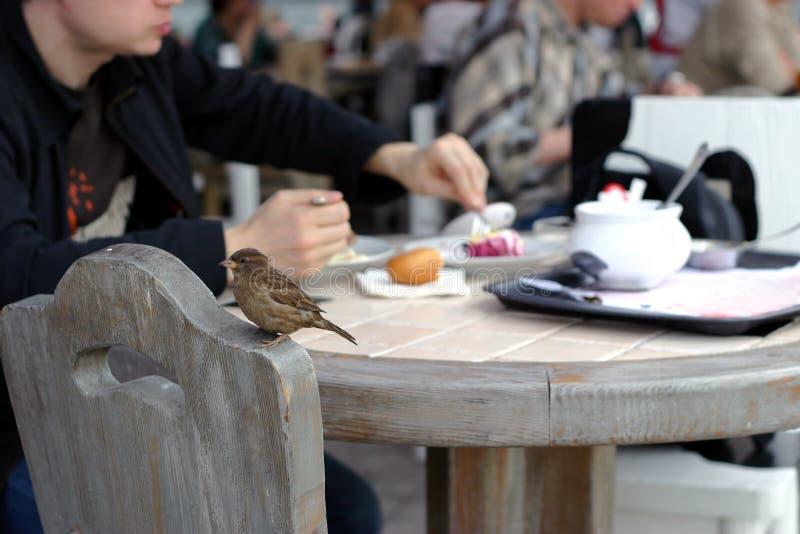 咖啡馆麻雀 免版税图库摄影