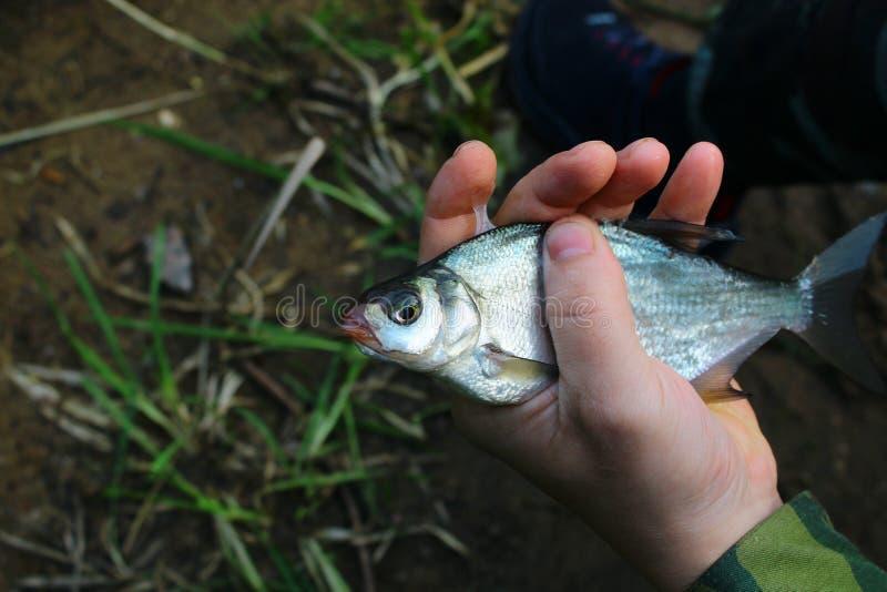 哀伤的在城市河在渔夫的手上鱼捕获,在 图库摄影