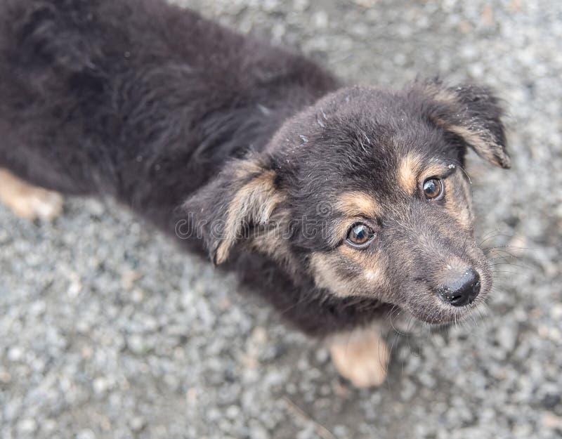 哀伤的小狗德国牧羊犬 免版税库存图片
