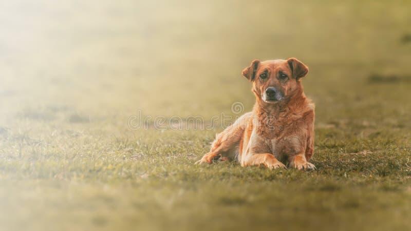 哀伤的无家可归的狗面孔坐街道有被弄脏的背景 图库摄影