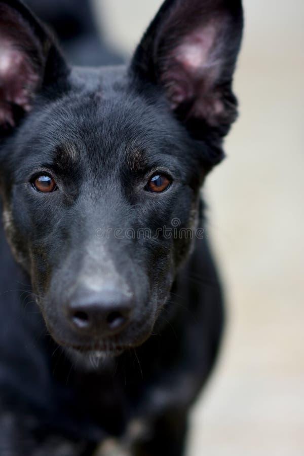 哀伤的沮丧的画象 在棕色眼睛的焦点 动物庇护所的概念 免版税库存图片