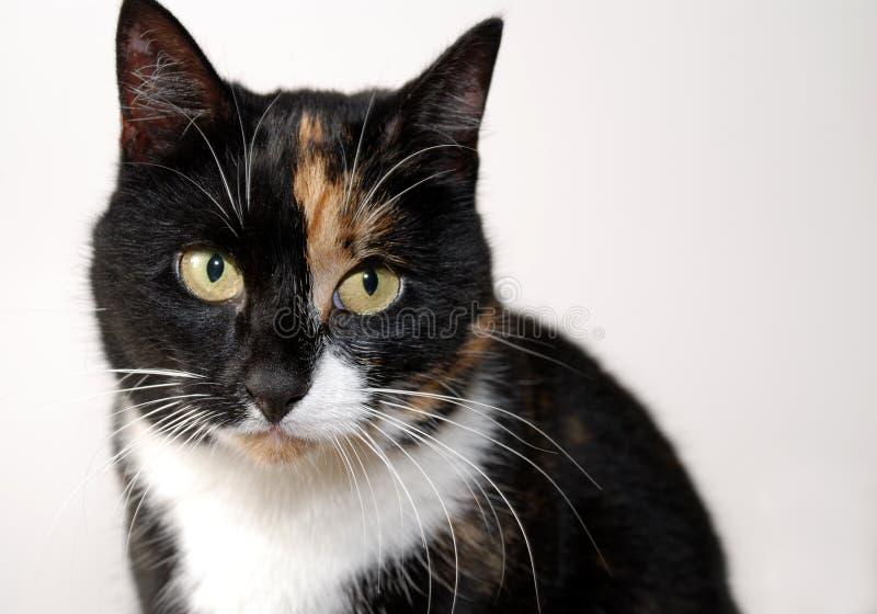 Download 哀伤的猫 库存图片. 图片 包括有 红色, 眼睛, 哀伤, 感受, 空白, 逗人喜爱, 愿望, 投反对票, 饥饿 - 3651421