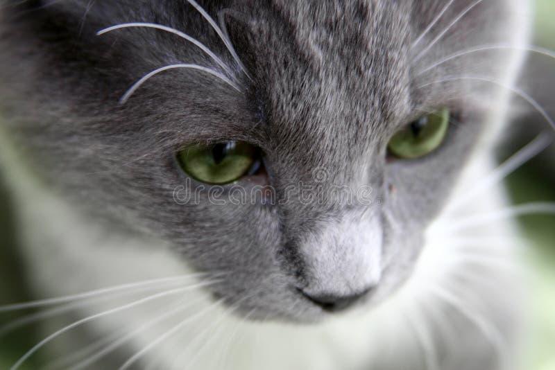 哀伤的猫 免版税库存图片