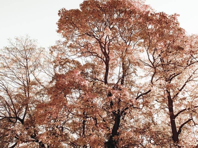 哀伤的秋天树 库存图片