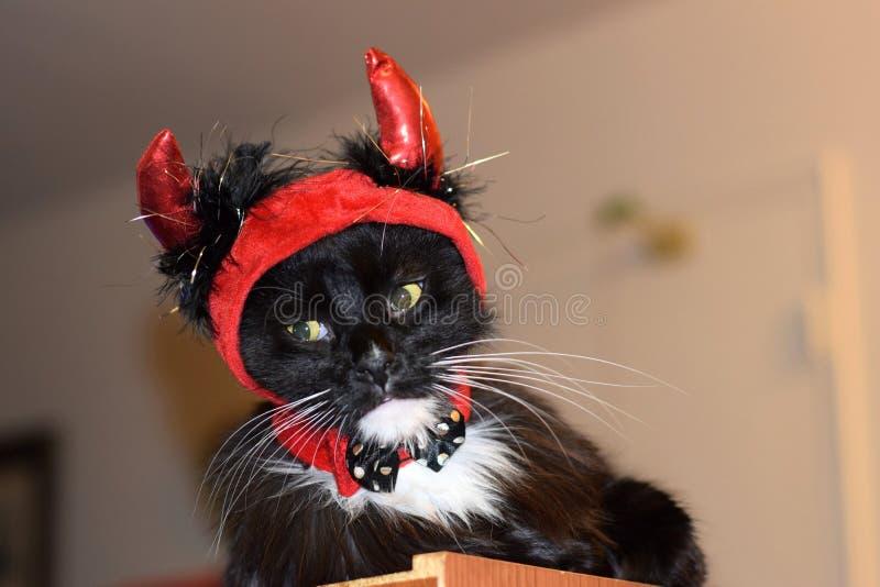 哀伤的蓬松恶魔猫 免版税库存图片
