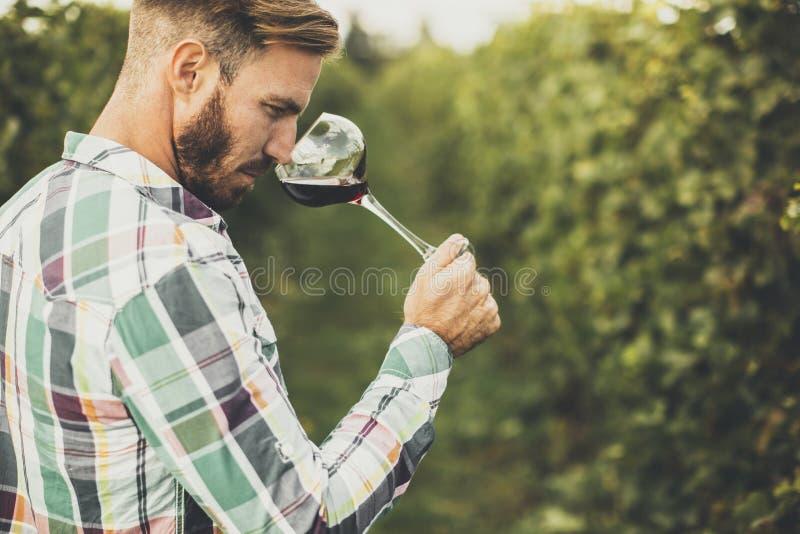 品尝红葡萄酒的年轻酿酒商在葡萄园里 库存照片