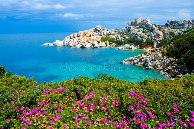 品柱介壳-撒丁岛的美丽的海岸 免版税库存照片