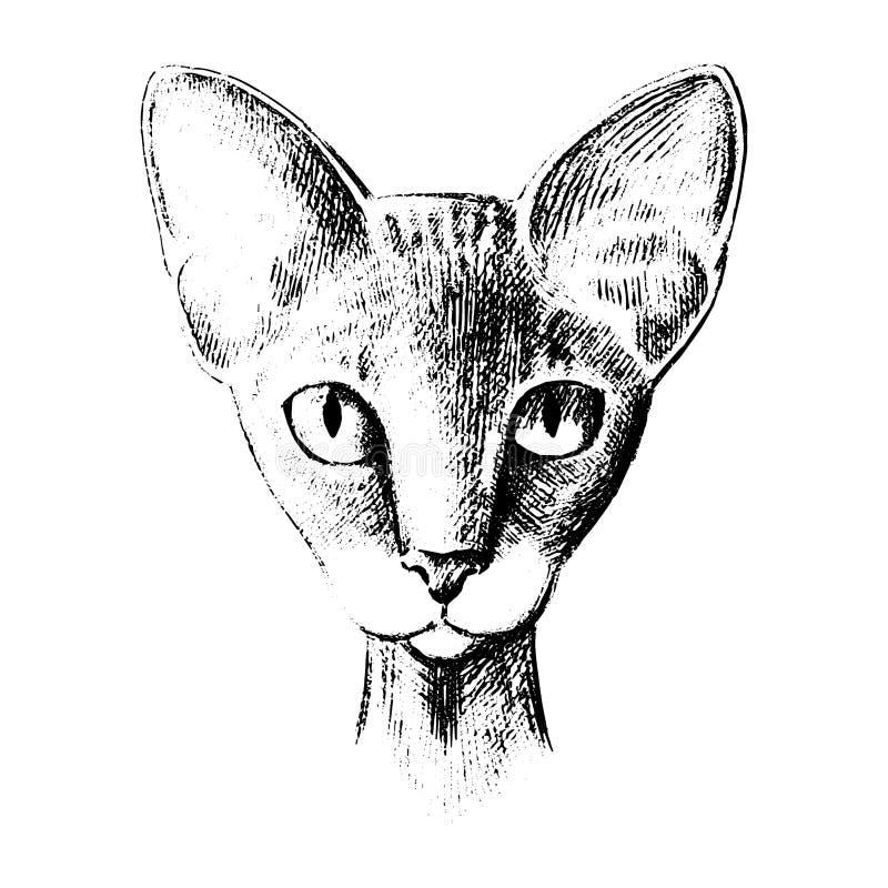 品种传染媒介猫狮身人面象头是对称剪影图表黑白传染媒介例证 向量例证
