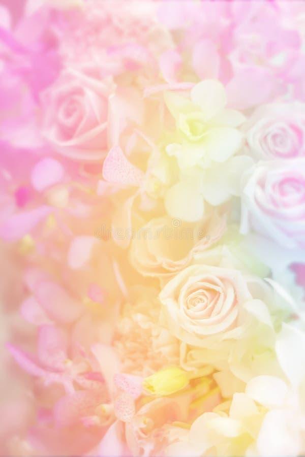 品种在淡色的花背景 库存图片