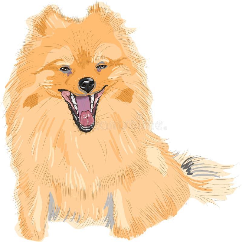 品种狗德国pomeranian微笑玩具 库存例证