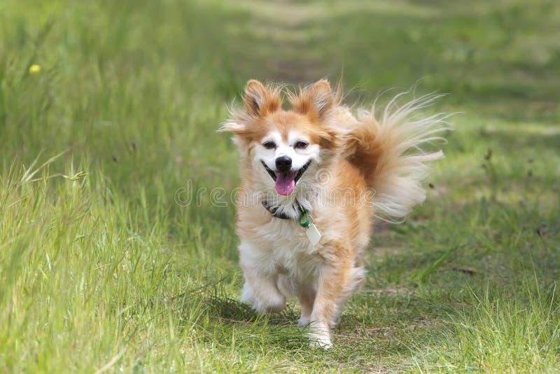品种狗混杂的路径 免版税库存图片