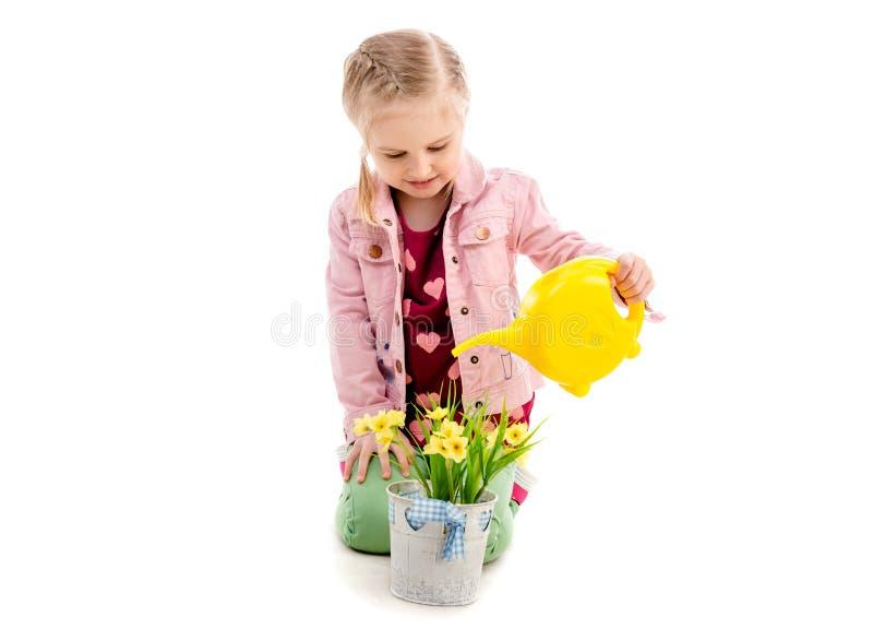 哄骗浇灌的花,隔绝在白色背景 库存图片