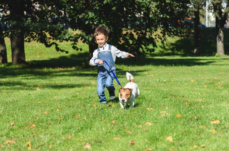 哄骗跑与在皮带的狗的男孩在公园草坪 库存图片