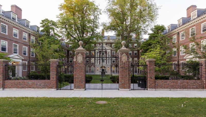 哈佛大学 库存照片