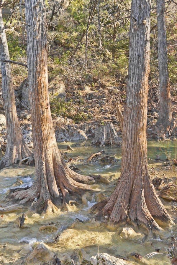 哈密尔顿水池的小河 免版税库存图片