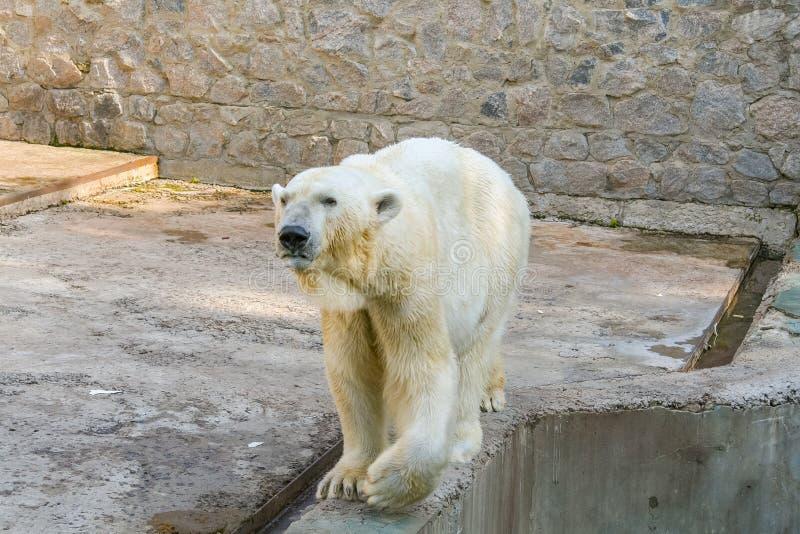 哈尔科夫州动物公园 免版税库存图片