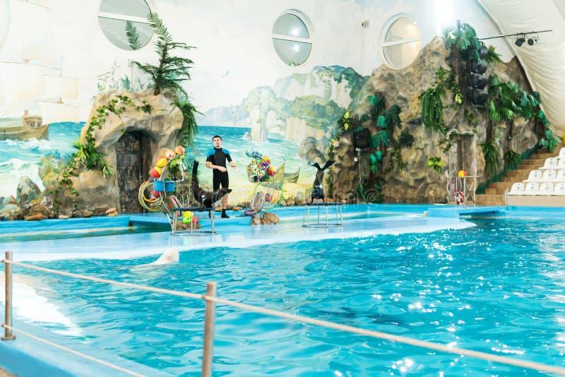 哈尔科夫,乌克兰- 2018年1月18日:显示与海狗 免版税库存图片
