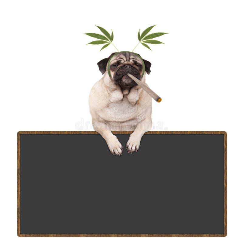 哈巴狗是的小狗高,抽烟的大麻杂草联接,佩带的大麻在黑板标志留下王冠,垂悬 库存照片