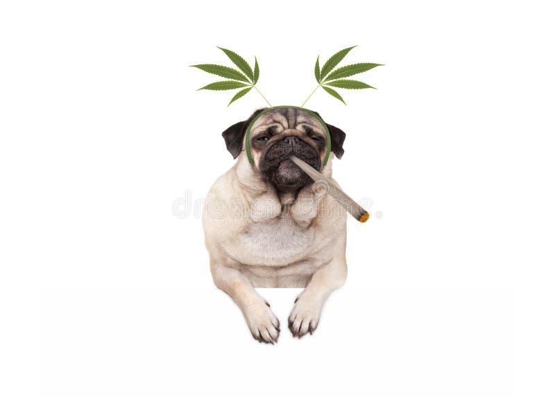 哈巴狗是的小狗高,抽烟的大麻杂草联接,佩带的大麻离开王冠 库存照片