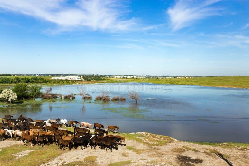 哈萨克斯坦干草原的一个湖在春天 免版税库存照片