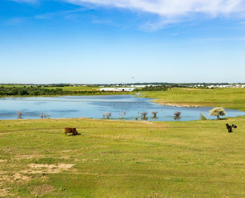 哈萨克斯坦干草原的一个湖在春天 库存图片