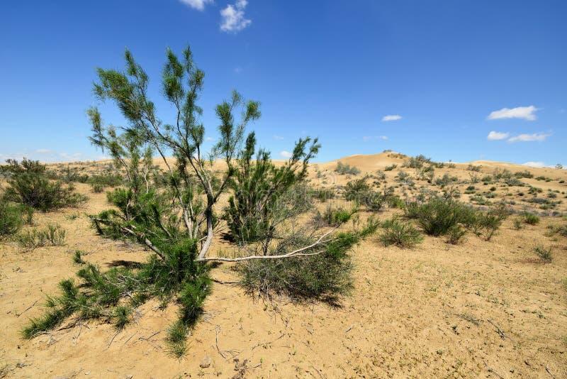 哈萨克斯坦, 沙漠风景,曼格斯套州 免版税库存图片