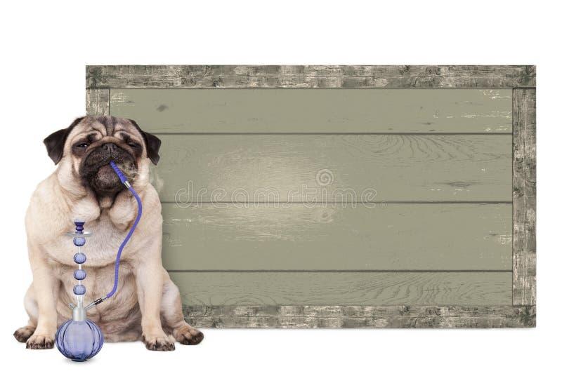 哈巴狗小狗抽烟的shisha水管,在葡萄酒木标志旁边,坐白色背景 库存图片