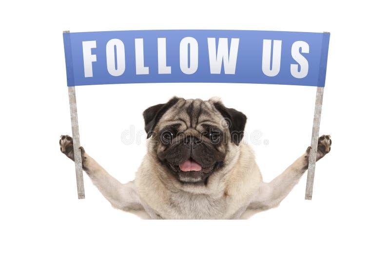 哈巴狗阻止与文本的小狗蓝色横幅为社会媒介跟随我们 免版税库存照片