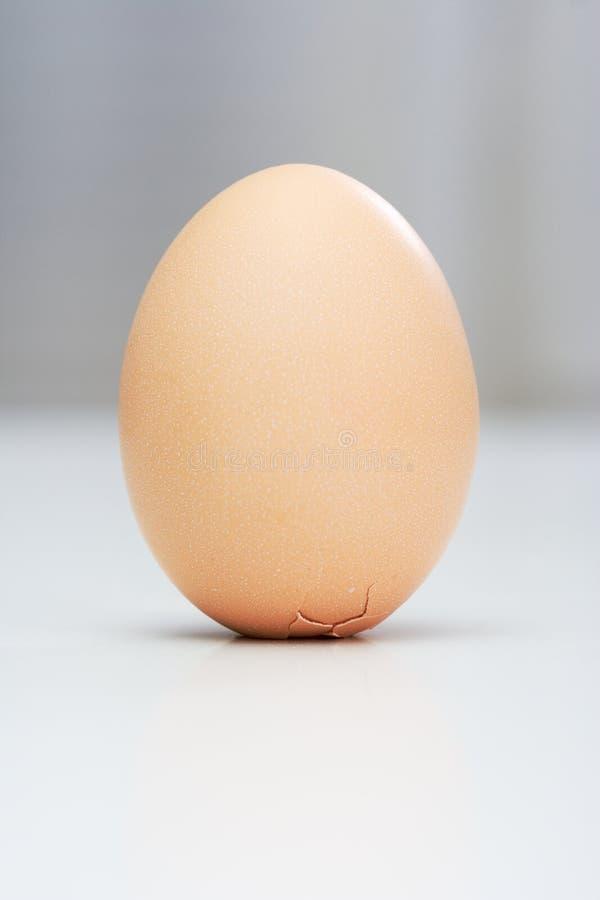 哥伦布鸡蛋 库存图片