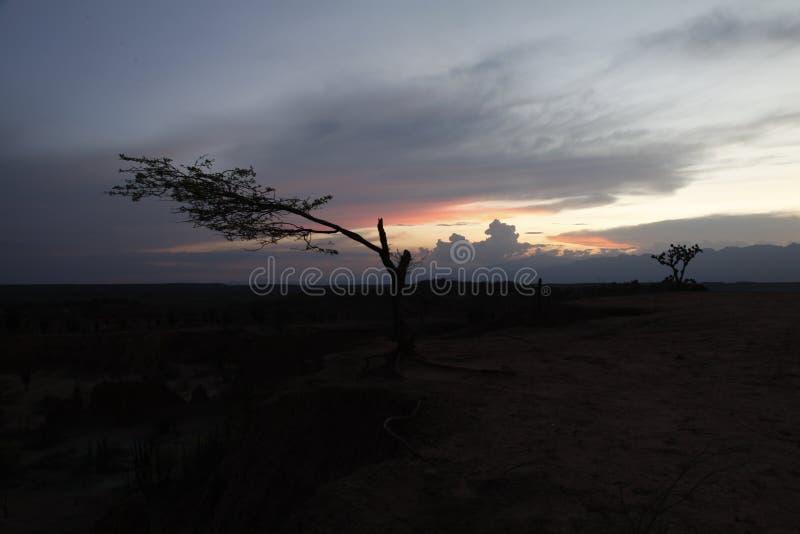 哥伦比亚沙漠 库存照片