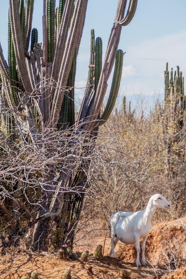 哥伦比亚沙漠tatacoa 库存图片