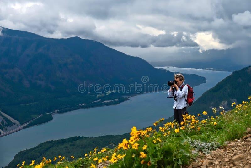 哥伦比亚河峡谷中年妇女远足的和拍摄的风景景色在有山金车花的高山草甸在盛开 库存图片