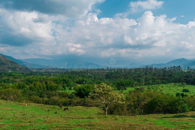 哥伦比亚的山风景  库存照片