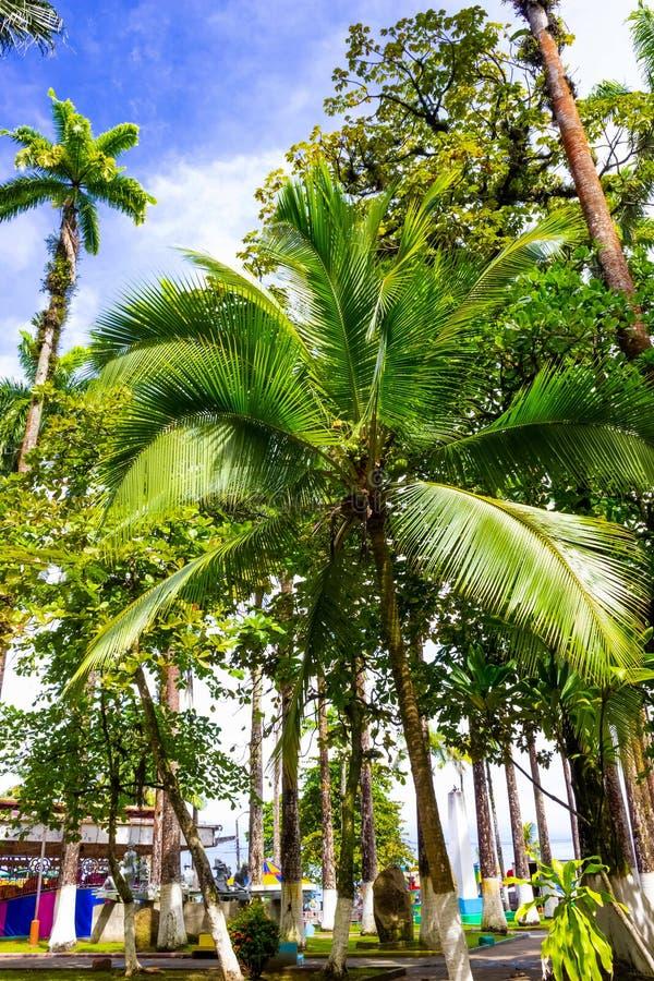 哥斯达黎加利蒙港城市公园瓦尔加斯公园 免版税图库摄影