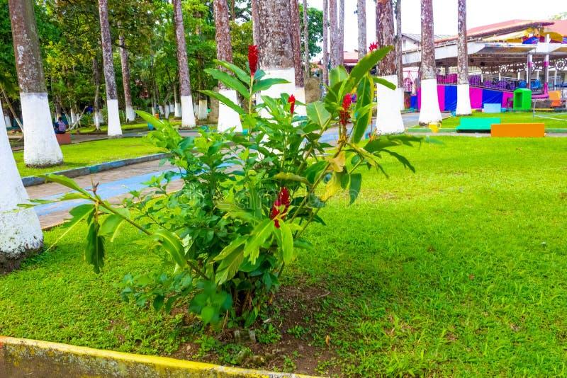 哥斯达黎加利蒙港城市公园瓦尔加斯公园 免版税库存图片